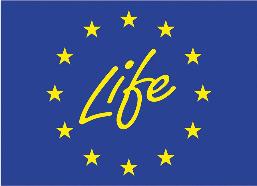 life-web.jpg