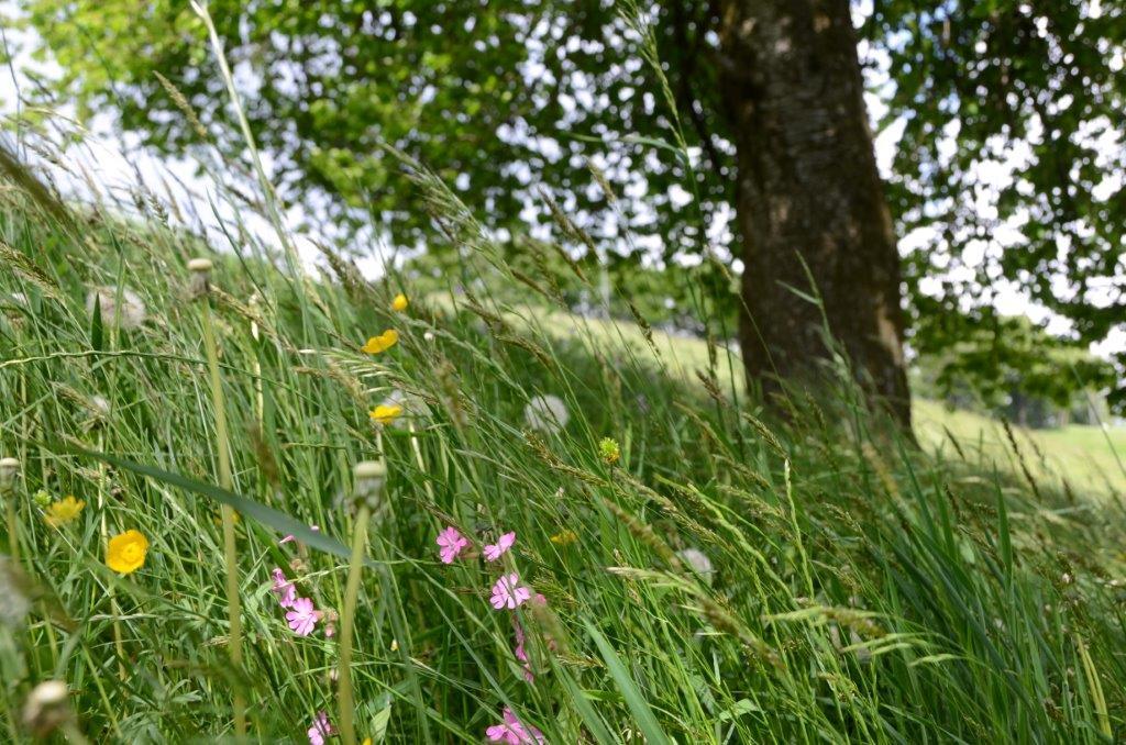 """Bandi PSRper imprese agricole ed Enti Gestori di aree protette e Natura 2000: pubblicato bando Sottomisura 10.1 """"Pagamenti per impegni agro climatico ambientali"""""""