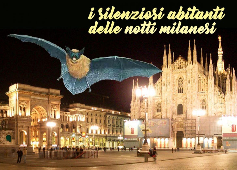 Bat-night-RITAGLIO-PER-NEWS.jpg