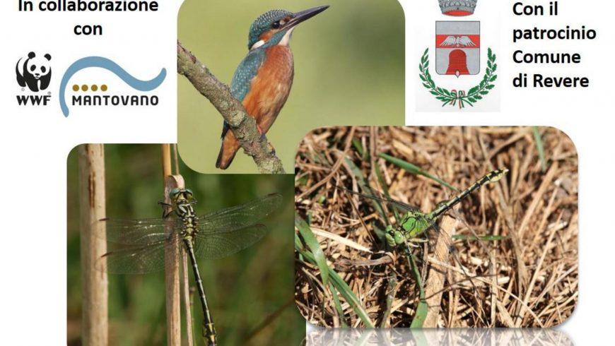 Seminario di aggiornamento per GEV su monitoraggio di invertebrati e uccelli di interesse comunitario a Revere (MN)