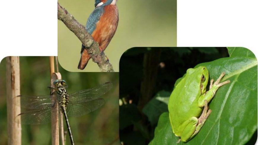 Monitoraggio di invertebrati, uccelli, anfibi e rettili di interesse comunitario