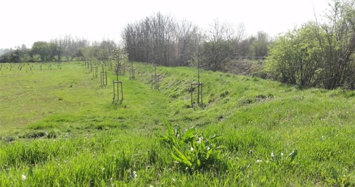 Biodiversità e risorse idriche: bandi PSR aprono il 1 febbraio