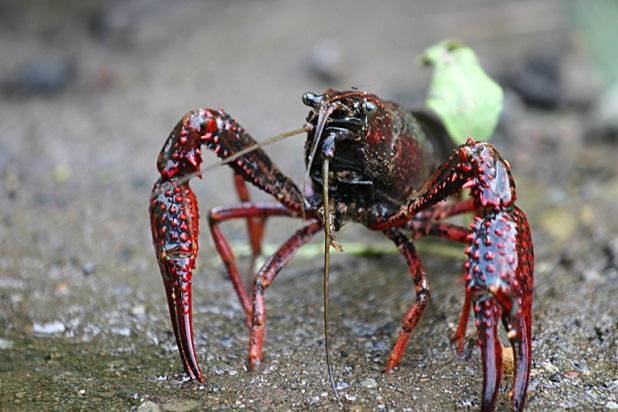 Italia si adegua a norme europee su contrasto specie esotiche invasive
