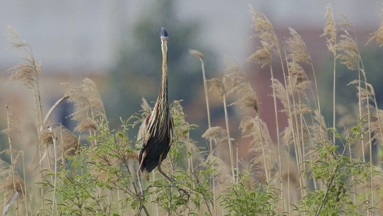 Uccelli e ambienti acquatici, come intervenire: on line le schede tecniche