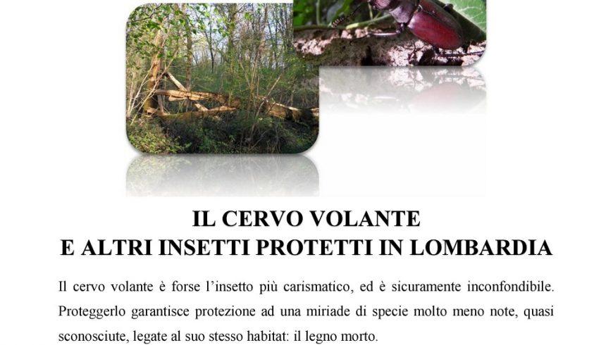 Il cervo volante e altri insetti protetti in Lombardia – Parco Groane