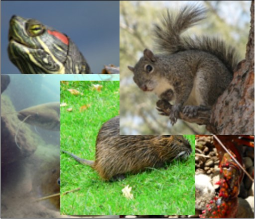 Specie-invasive.jpg