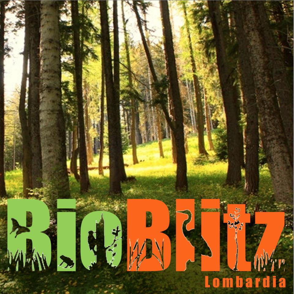 Bioblitz_banner.png