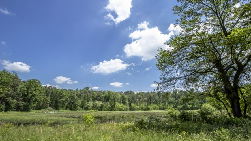 Pubblicate fonti documentali su biodiversità e reti ecologiche
