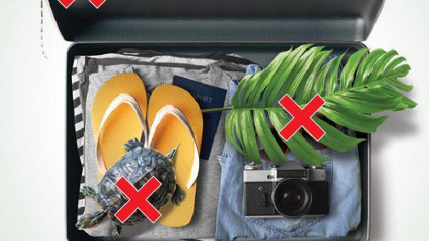 Specie esotiche invasive: parte campagna informativa di Life Gestire 2020 all'aeroporto Orio al Serio