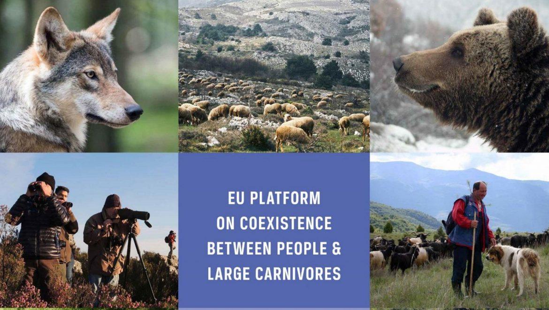 La piattaforma europea sulla coesistenza tra uomo e grandi carnivori