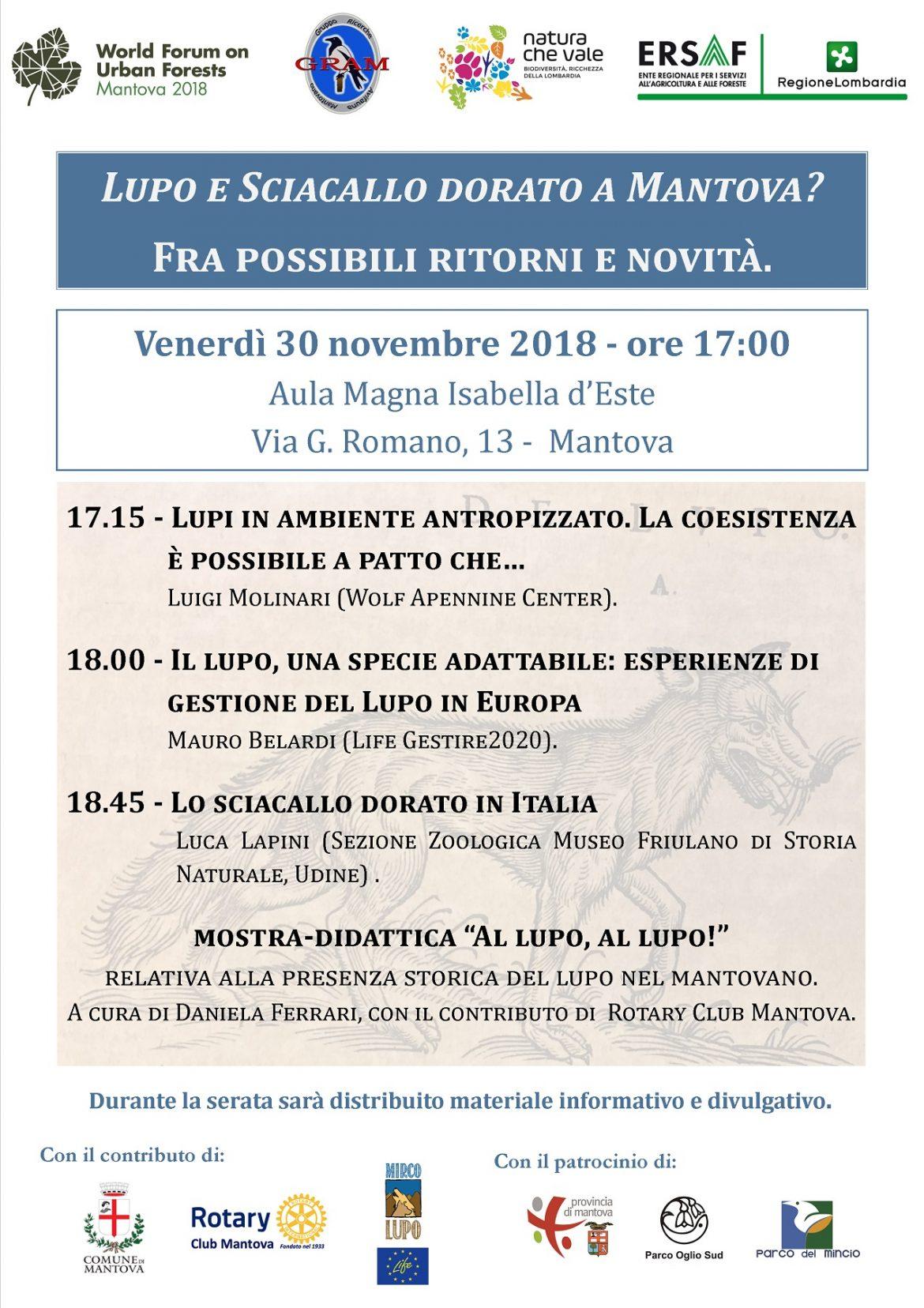 Lupo-e-sciacallo-dorato-a-Mantova-30-novembre.jpg