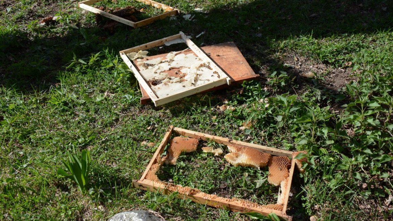 Apicoltura. Contributi per l'acquisto di recinti elettrificati per la difesa degli apiari dall'orso