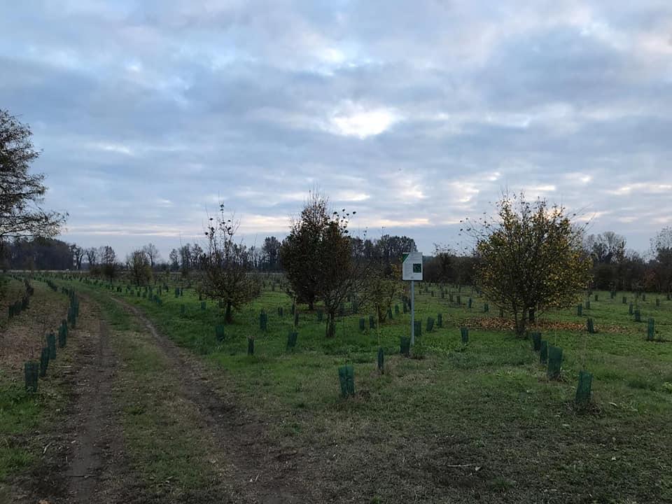 fontanile-nuovo-di-Bareggio-del-Parco-Agricolo-Sud-di-Milano3.jpg