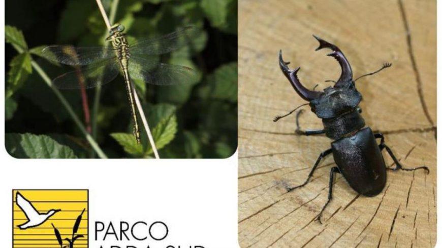 Le specie di insetti protetti in Lombardia e nel Parco Adda Sud – incontro formativo il 15 marzo a Lodi