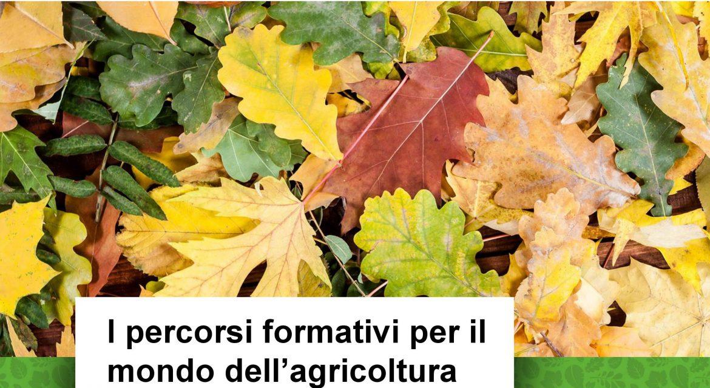 banner-3-percorsi-formativi-agricoltura.jpg