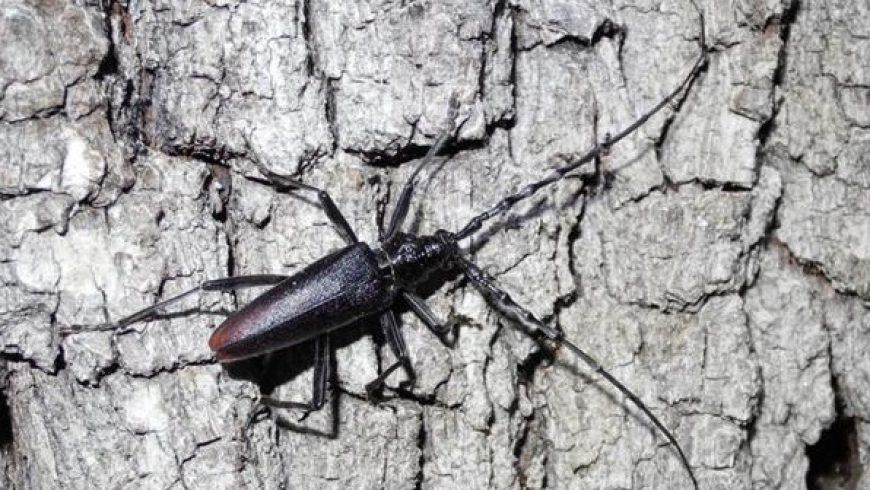 Le specie di insetti protetti in Valtellina – Morbegno (SO)