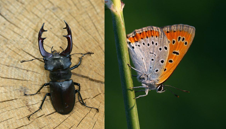 banner-insetti-protetti.jpg