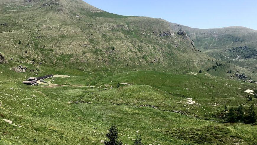 Tutela habitat e pascoli: avviati lavori per la redazione dei piani di pascolamento in 10 alpeggi