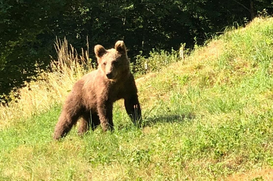 Cosa faccio se incontro un orso? Ecco alcuni consigli