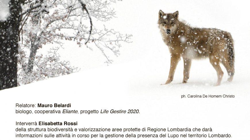 Il ritorno naturale del Lupo sulle Alpi – Como