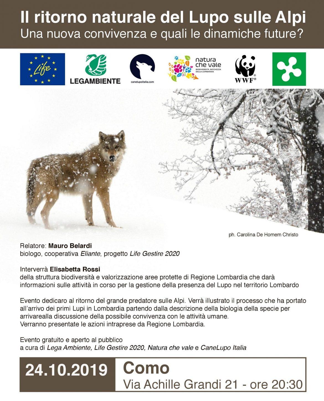 Il-ritorno-naturale-del-lupo-Como-24-ottobre-19.jpg