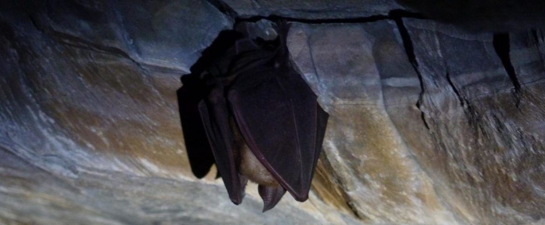 La-vita-nelle-grotte-banner.jpg