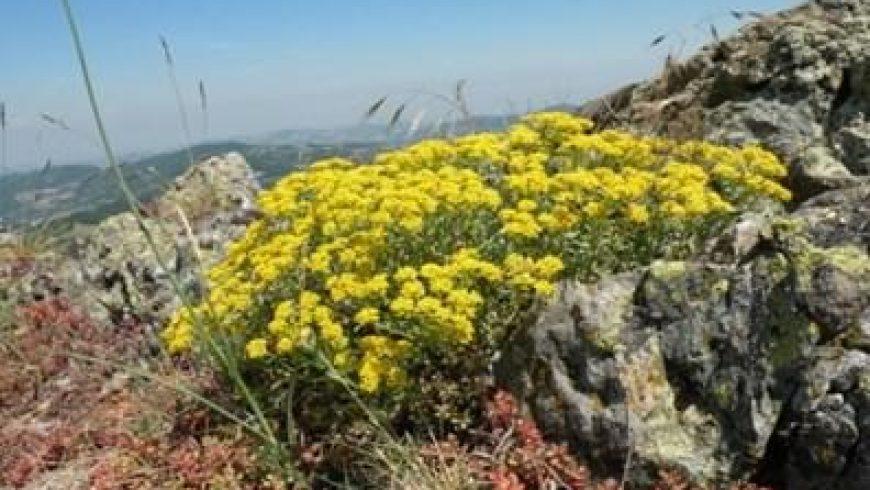 SIC Sassi neri – Pietra Corva: tutela biodiversità e valorizzazione territorio – Romagnese (PV)