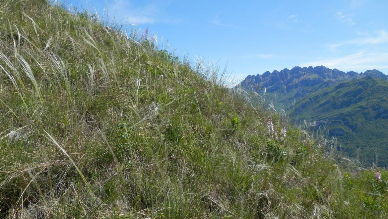 Life Gestire 2020: attivato nuovo servizio di facilitazione e progettazione per la biodiversità in Lombardia