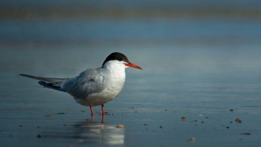Uccelli dei greti fluviali