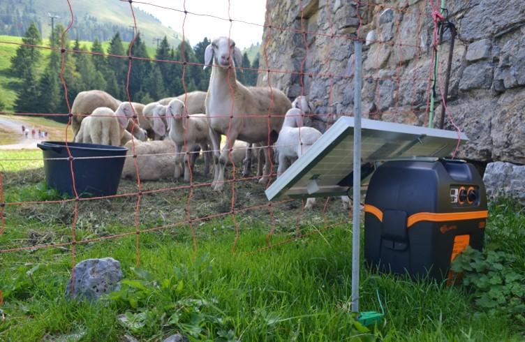 Contributi per la prevenzione dei danni da fauna selvatica – presentazione delle domande al 31 maggio 2020