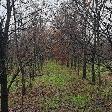 Dalmine intitola il suo bosco urbano a Elena Tironi