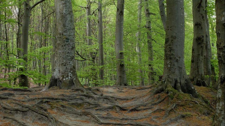 Consultazione pubblica sullo stato delle foreste in Europa