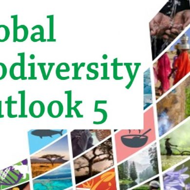 Pubblicato il nuovo rapporto sulle prospettive globali della biodiversità