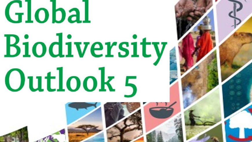 The global perspectives on biodiversity