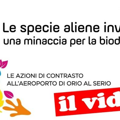 Specie aliene invasive: le azioni di contrasto all'aeroporto Orio al Serio – il video