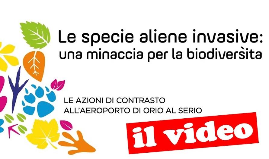 Banner-video-Orio-al-Serio-il-video2.jpg