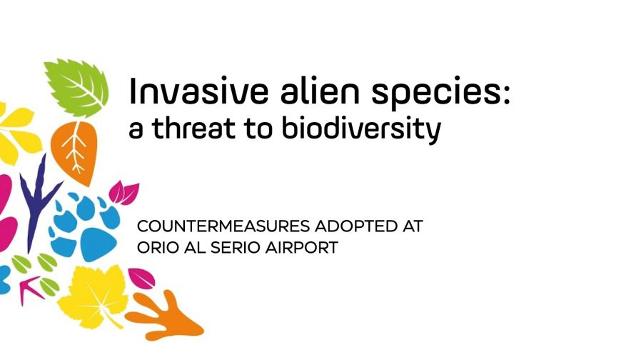Invasive alien species: countermeasures adopted at Orio al Serio Airport– video