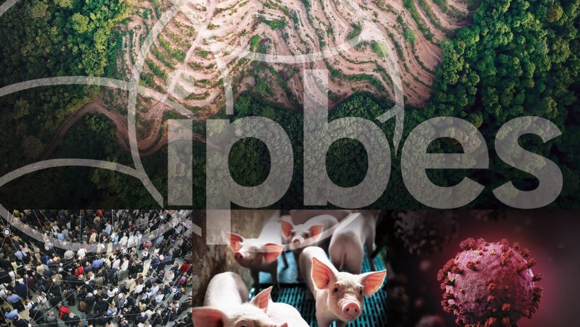 Biodiversity and pandemics: the Ipbes report