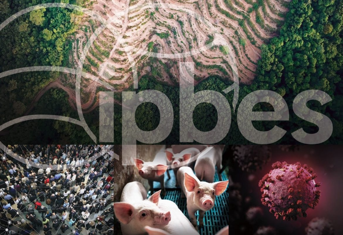 Banner-IPBES-Workshop-on-Biodiversity-and-Pandemics-Report.jpg