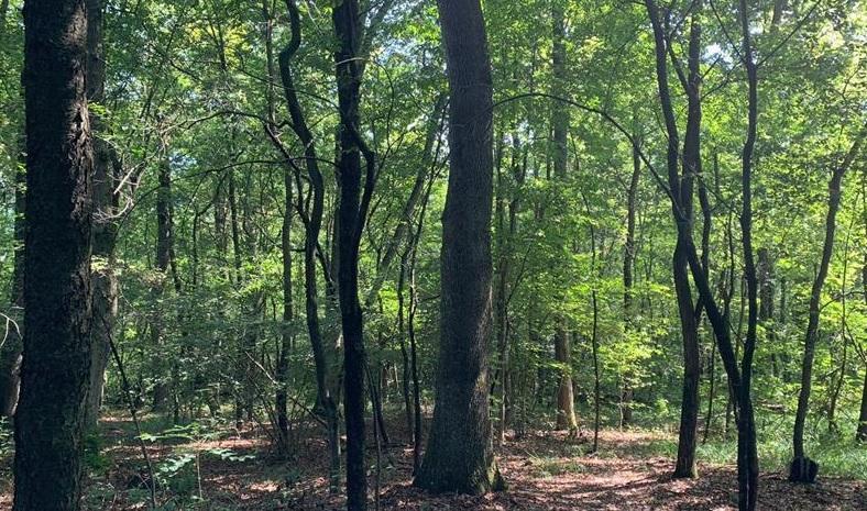 Miglioramento degli habitat forestali: gli interventi nei querceti di farnia