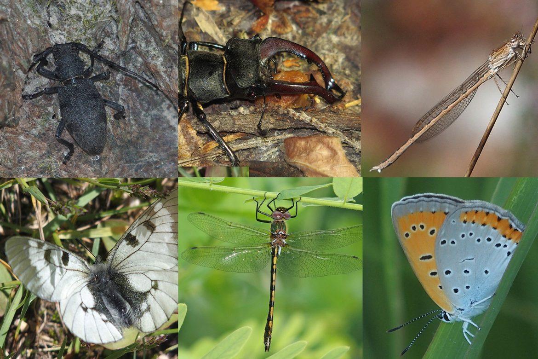 Foto-1-segnalazione-insetti-2021-01.jpg