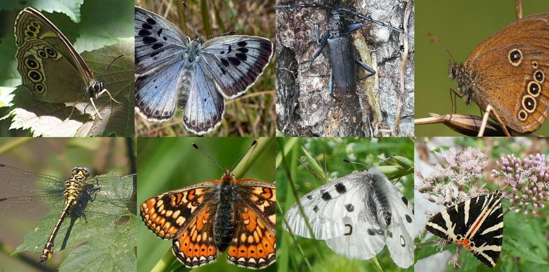 Foto-2-segnalazione-insetti-2021-01.jpg