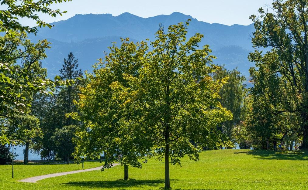 6 milioni di euro per infrastrutture verdi a rilevanza ecologica e di incremento della naturalità – pubblicato il bando