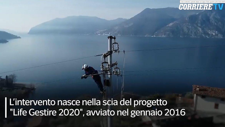 07/03/2021 Così si salvano i grandi rapaci sul Lago d'Iseo: guaine sulle linee elettriche