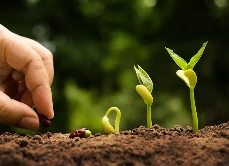 """Bando Cariplo """"Coltivare Valore"""": 2 milioni per finanziare pratiche di agricoltura sostenibile"""