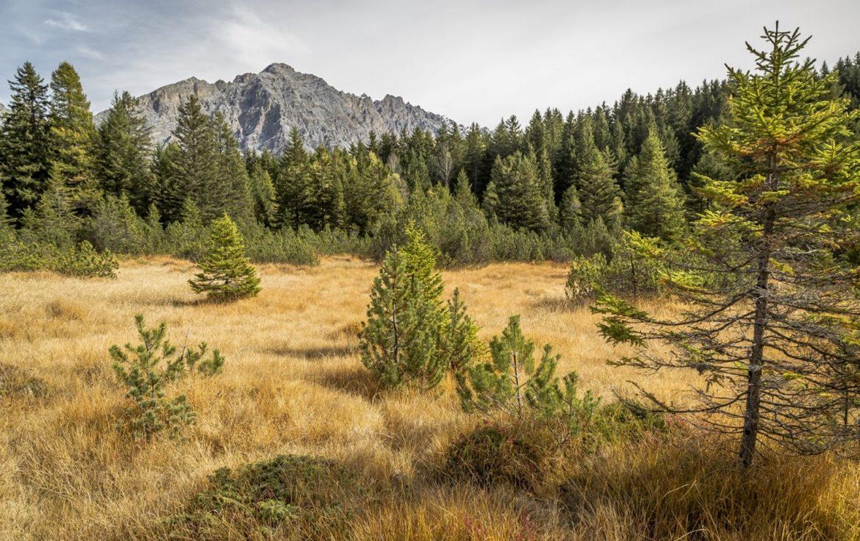 Torbiere-boscate-di-montagna.jpg