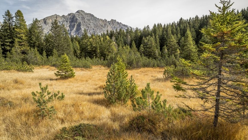 #Natura2000Day – la Rete Natura 2000 compie 29 anni