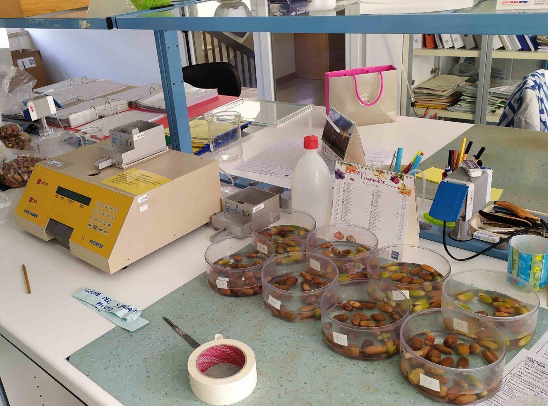 test-di-germinazione-della-farnia-2020-3.jpg