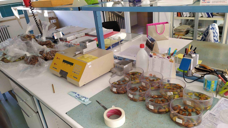 test-di-germinazione-della-farnia-2020-scaled.jpg