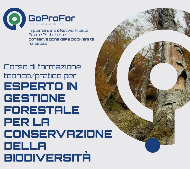 Corso-formazione-GoProFor-13-16-luglio-2021-banner.jpg